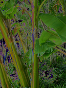 Roger Mullenhour - Solarized Banana Trees