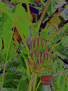 Roger Mullenhour - Solarized Bananas