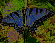 Fluttering Digital Art - Solarized Butterfly by Debra     Vatalaro