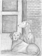 Dogs Drawings - Soleira by Thais Gentil