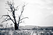 Oak Tree Photos - Solemn Oak by Justin Albrecht
