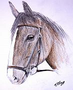 Horses Drawings - Solemn by Terence John Cleary