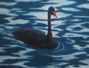 Swan Paintings - Solitaire by Roseann Gilmore