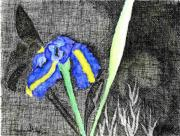 Works Drawings Originals - Solitary Iris by Saundra Lee York