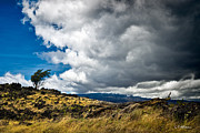 Hawai Prints - Solitary Stand Print by Christopher Holmes