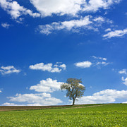 Cloud Photo Photos - Solitary tree in green meadow by Bernard Jaubert