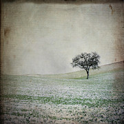 Winter Trees Photos - Solitary tree in winter. Auvergne. France. Europe by Bernard Jaubert