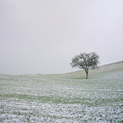 Coolness Photo Prints - Solitary tree in winter Print by Bernard Jaubert