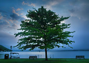 Finger Lakes Framed Prints - Solitary Tree Framed Print by Steven Ainsworth