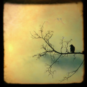 Starlings Digital Art Metal Prints - Solitude Mood Metal Print by Gothicolors And Crows