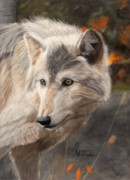 Wolves Pastels Framed Prints - Solitude Framed Print by Nichole Taylor