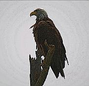 Eagles Mixed Media - Solitude by Robert Pearson
