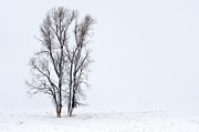 Snowstorm Art - Solitude by Sandra Bronstein