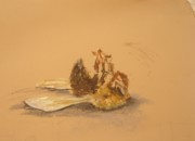 Insects Pastels - Solitude-Study by Soulaf Abas