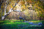 Fall Scene Prints - Solitude under the Sycamore Print by Carol Groenen
