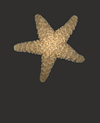 Seashell Art Prints - Solo Starfish I Print by Suzanne Gaff
