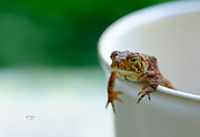 Toads Framed Prints - Somebody Needs Coffee Framed Print by Lois Bryan