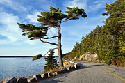 Scenic Drive Framed Prints - Somes Sound Maine Framed Print by John Greim