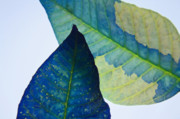 Something Blue Print by Bobby Villapando