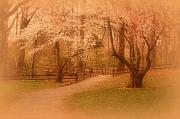 Cherry Blossoms Digital Art - Sometimes - Holmdel Park by Angie McKenzie