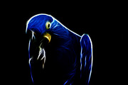 Macaw Art - Somewhat Blue by Douglas Barnard