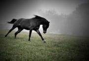 Running Horses Photos - Somewhere To Be by Emily Stauring