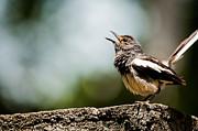 Venura Herath - Song of Nature