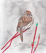 Sparrow Drawings Prints - Song Sparrow Print by Don  Gallacher