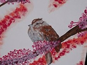 Shane Miller - Song Sparrow  On Red Bud...