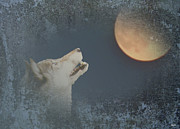 Beauty Of Wolves Prints - Song To The Moon Print by Debra     Vatalaro