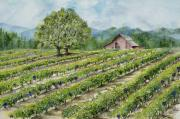 Wine Country Watercolor Paintings - Sonoma County Vineyard by Virginia McLaren