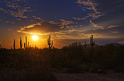 Southwest Landscape Metal Prints - Sonoran Sunset  Metal Print by Saija  Lehtonen