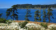 Juan De Fuca Photos - Sooke Harbour and the Strait of Juan de Fuca by Louise Heusinkveld