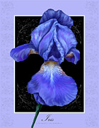 Cultivate Digital Art Framed Prints - Soothing Iris Framed Print by Lonnie Tapia