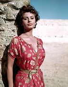 Belted Dress Posters - Sophia Loren, 1950s Poster by Everett