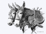Pencil Drawing Prints - Sorrel Mule Team Print by Bethany Caskey