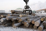 Sawmill Prints - Sorting Wood Stocks At A Sawmill Print by Ria Novosti