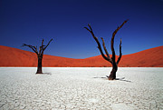 Dry Metal Prints - Sossusvlei In Namib Desert, Namibia Metal Print by Igor Bilic Photography
