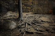 Tree Roots Photos - Soul Searching by Robin-lee Vieira