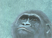 Gorilla Mixed Media Posters - Soulful Gaze Poster by Laurel Porter-Gaylord
