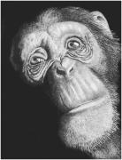 Chimpanzee Drawings Posters - Soulful in Ink Poster by Lawrence Tripoli