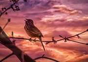 Sparrow Prints - Sounds of Spring Print by Bob Orsillo