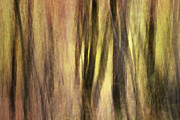 Autumn Photographs Photo Metal Prints - Sourwoods in Autumn Abstract Metal Print by Rob Travis