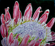 Home Decor Tapestries - Textiles Prints - South African Flower Protea Painting Print by Sylvie Heasman