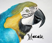 Becky Ellis - South American Macaw