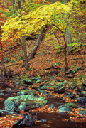 Virginia Digital Art Prints - South Branch Quantico Creek Fall Color Print by Thomas R Fletcher
