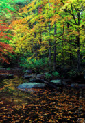 Virginia Digital Art Prints - South Branch Quantico Creek Print by Thomas R Fletcher