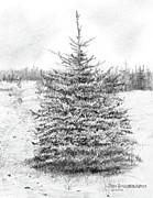 Jim Hubbard - South Dakota-Black Hills Spruce