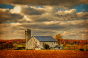 White Barn Framed Prints - South For The Winter Framed Print by Lois Bryan