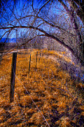 Flood Prints - South Platte Fenceline Print by David Patterson